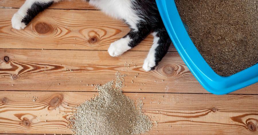 gato blanco y negro con arena y arenero