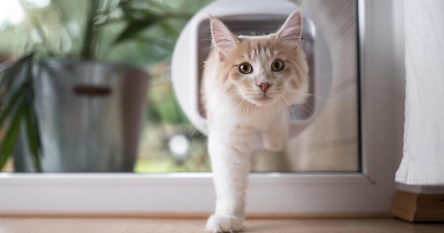Cat using a cat flap
