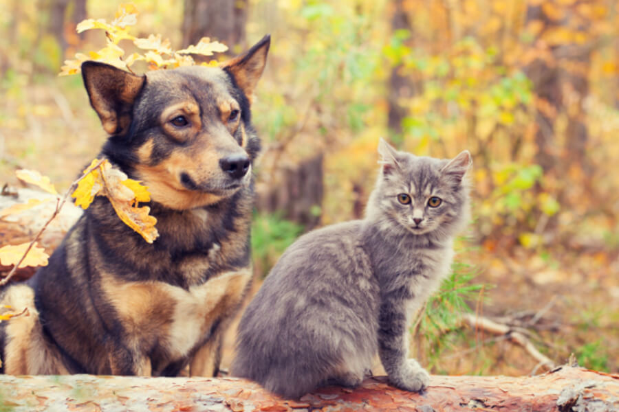 Dog and cat in the forest