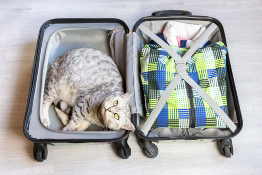Cat in a luggage