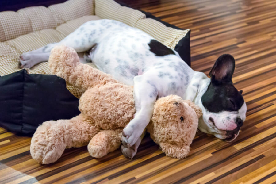 Dog with his teddy bear