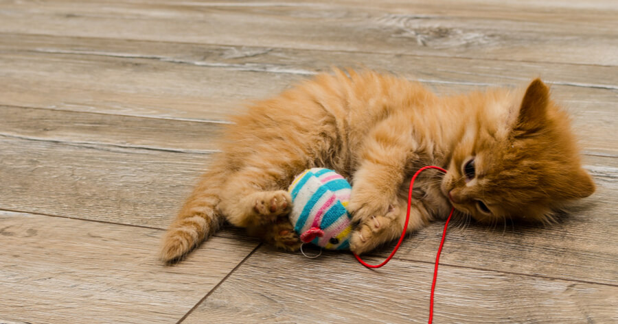 Ginger kitten playing with string