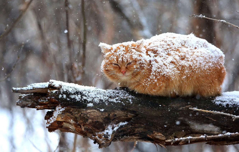 gato cubierto de nieve