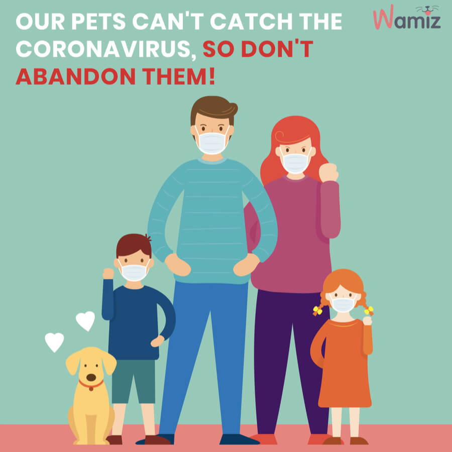 Pets cannot transmit the virus