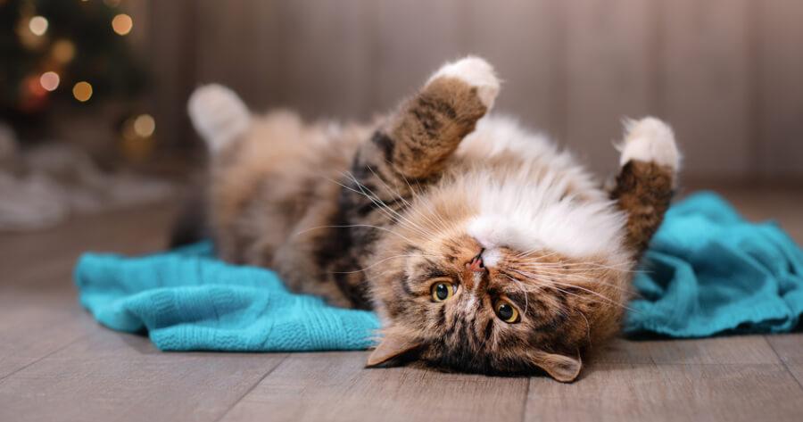 Cat lying upside down