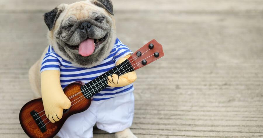 Pug playing the guitar