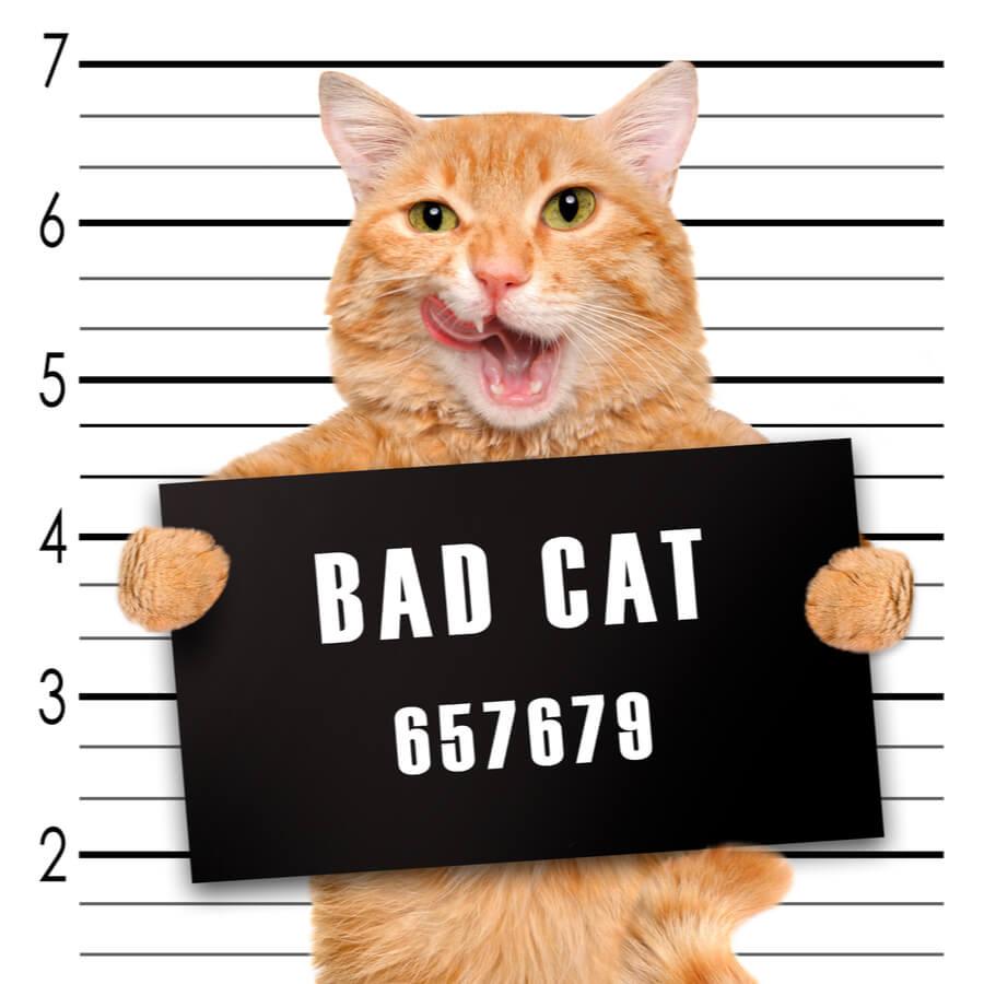 Bad cat behind bars