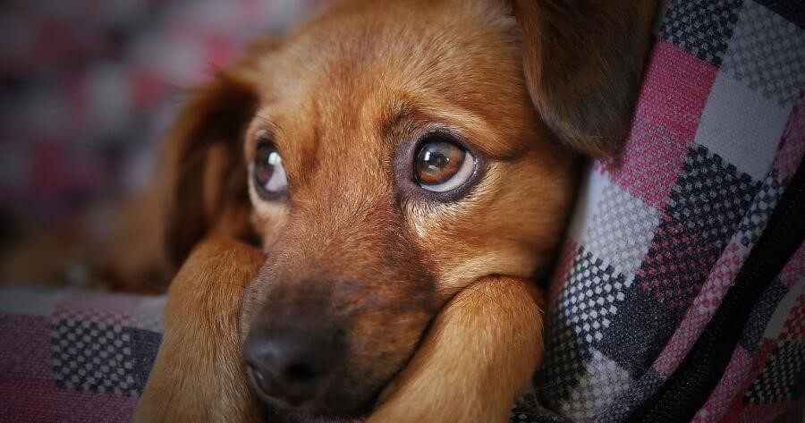 Dog frightened by noisy fireworks
