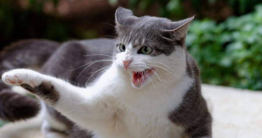 Aggressive Katze