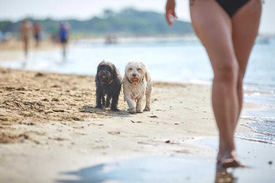 Hund am Strand in Bibione
