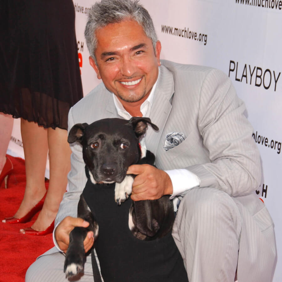 Cesar Millan mit Hund