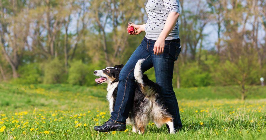 Dog Dancing