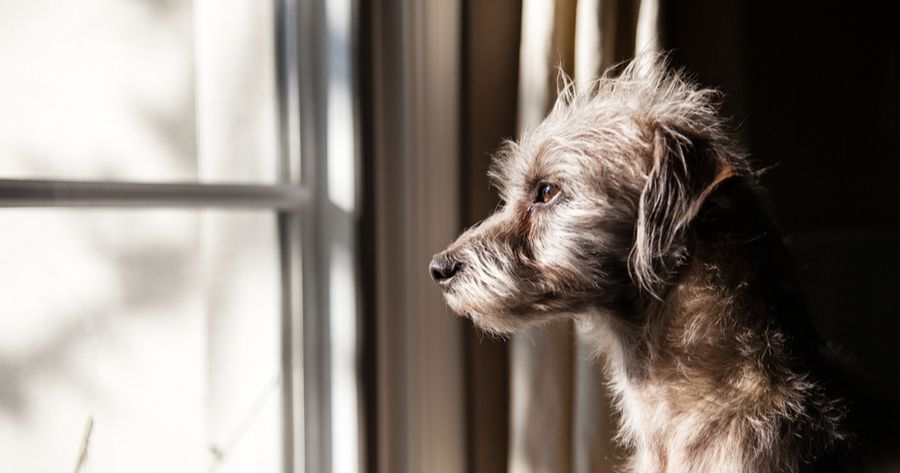 Trauriger Terrier-Mix