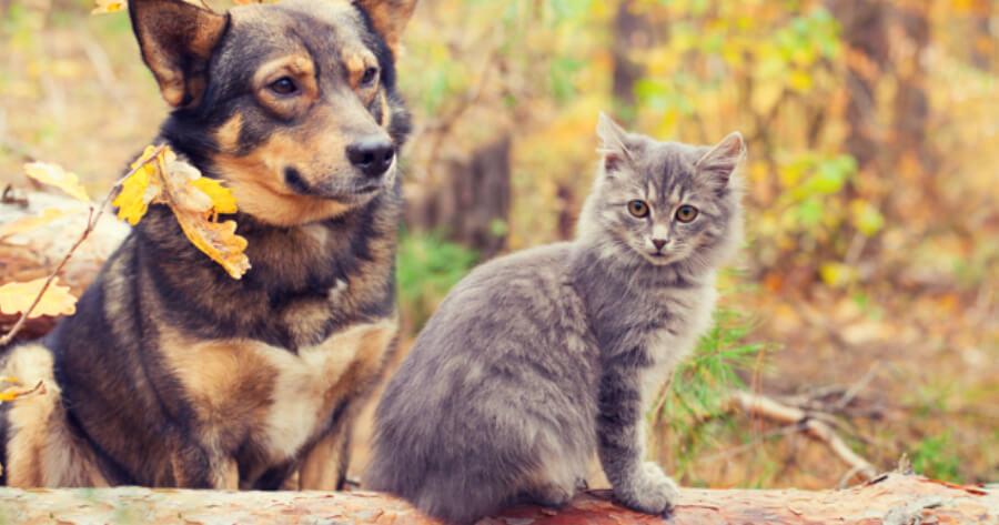 Hund und Katze im Wald