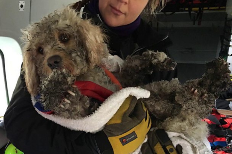 Hund Ben gerettet