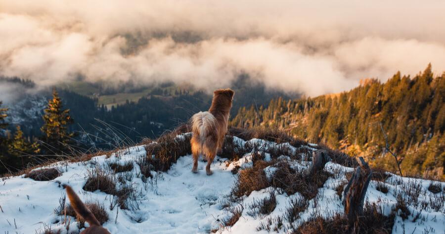 Hund im Winter auf Berg
