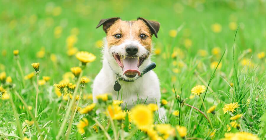 Hund auf Blumenwiese