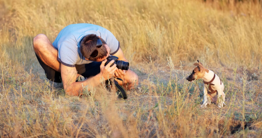 Hund beim Fotoshooting