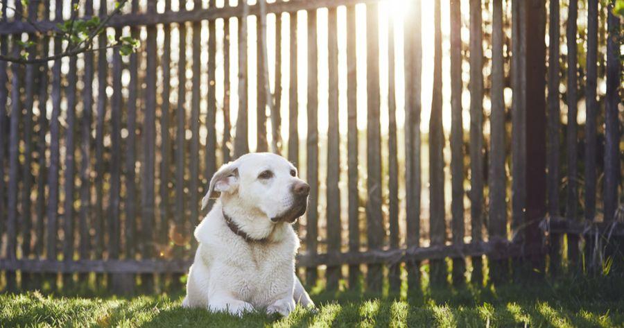 Hund Garten Zaun