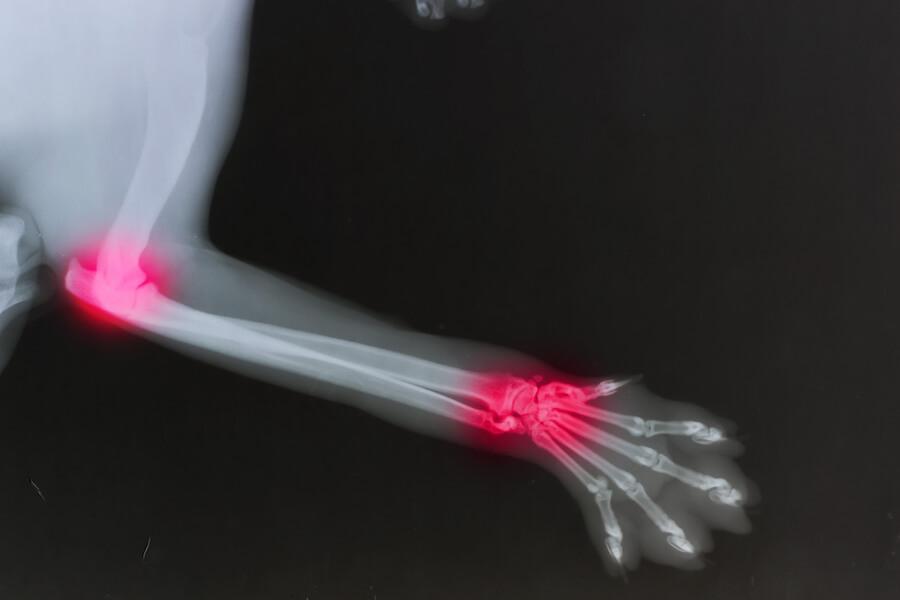 Beim Hund Gelenke stärken gegen Arthrose