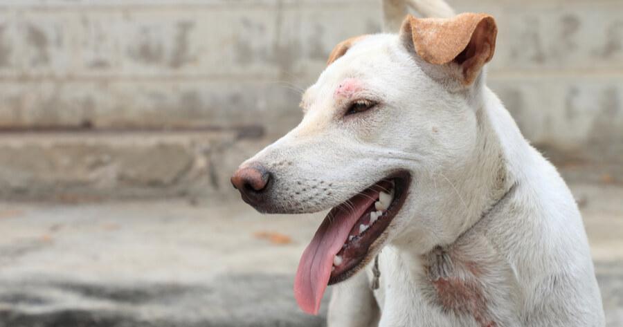 Hund mit trockener Haut