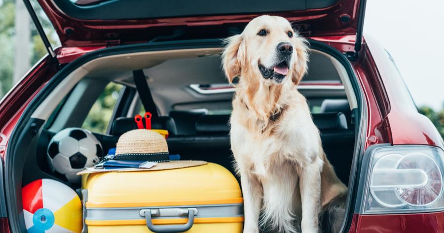 Hund Kofferraum Gepäck