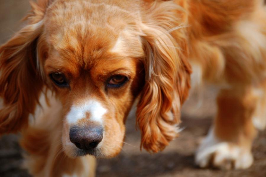 Hund Nacken