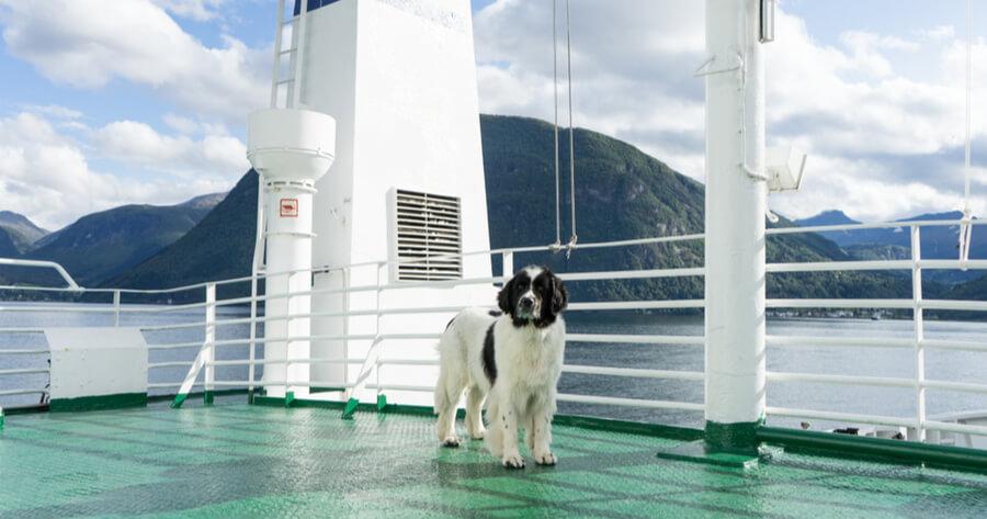 Hund auf Kreuzfahrtschiff