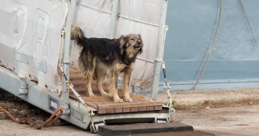 Hund beim Landgang