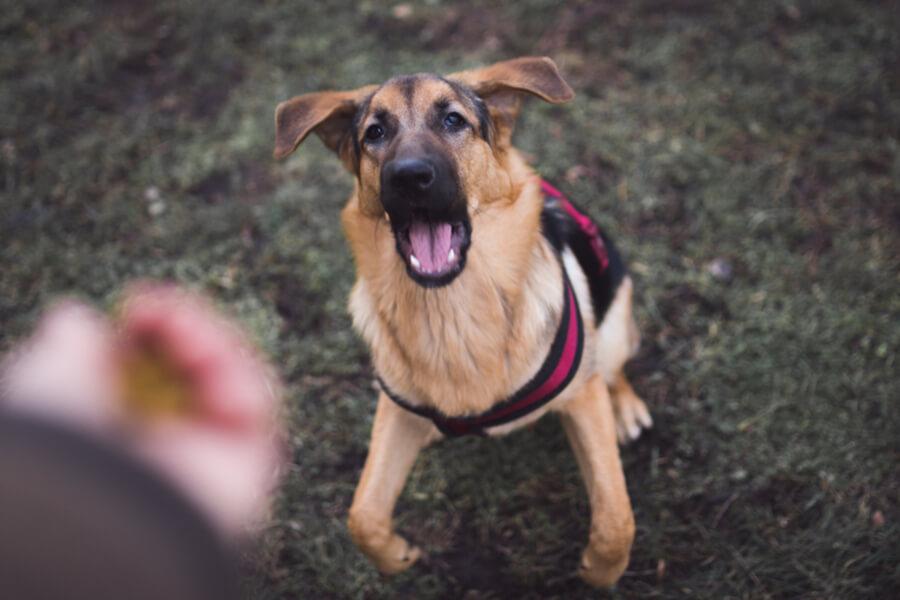 Hund bellt Besitzer an
