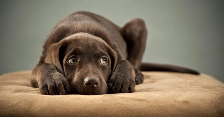 Hund gestresst