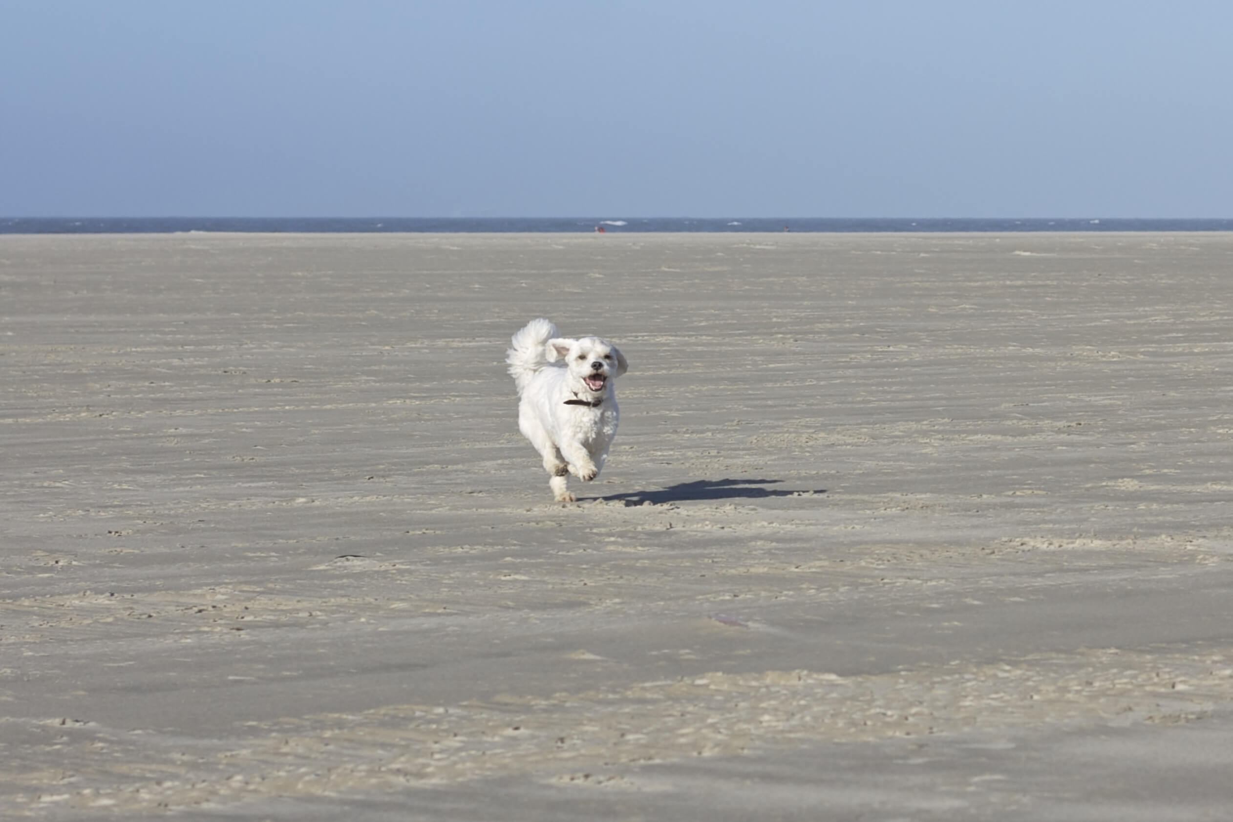 Hund im Wattenmeer