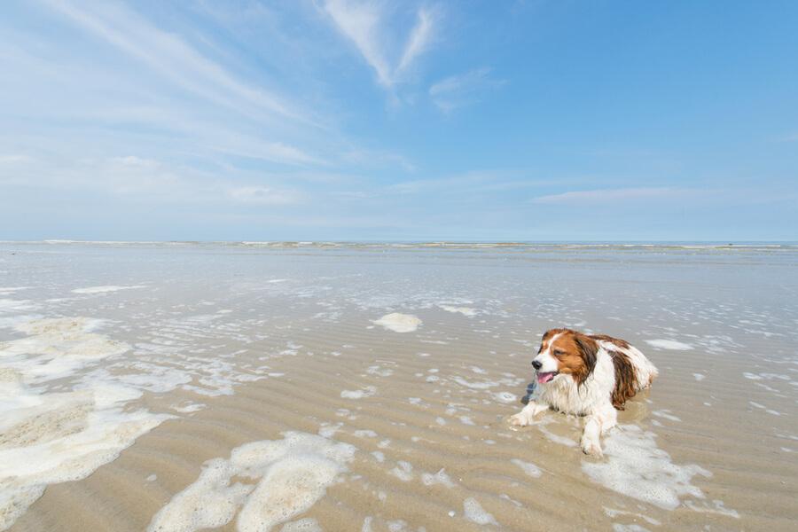 Hund liegt im flachen Wasser