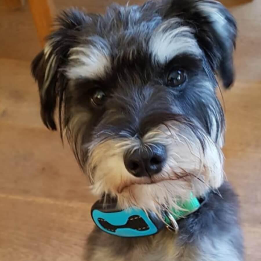 Hund mit Antibellhalsband