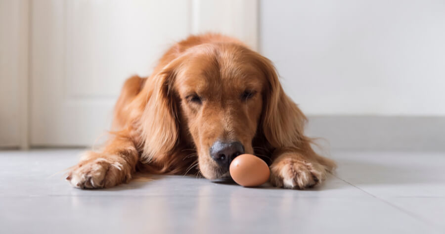 Hunde mit Ei