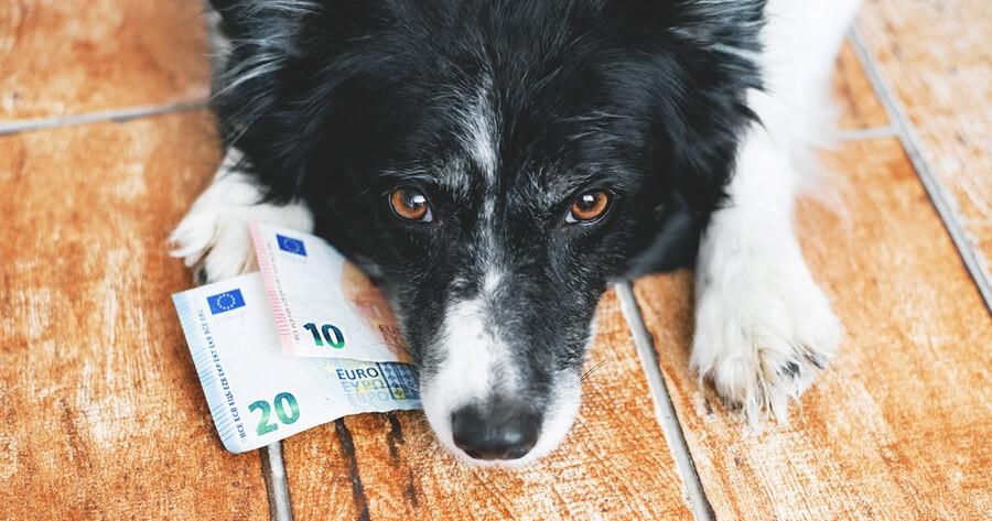 Hund mit Geldscheinen
