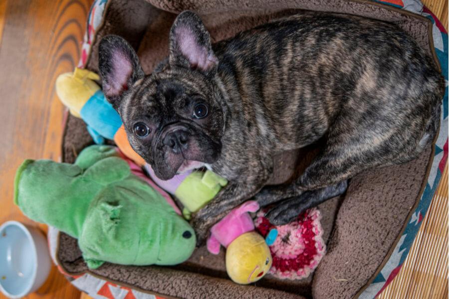 Hund mit Spielzeugen