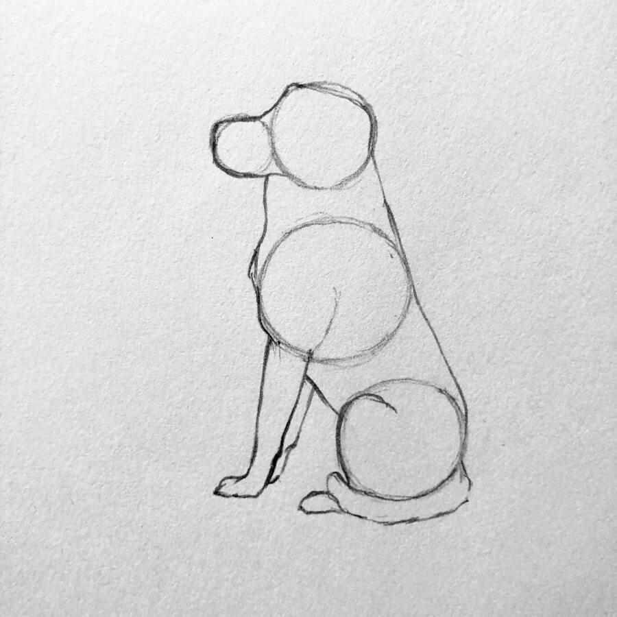 dibujar un perro paso 3