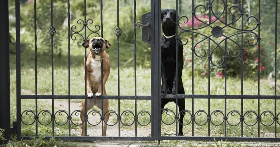 Hunde bellen an Tor