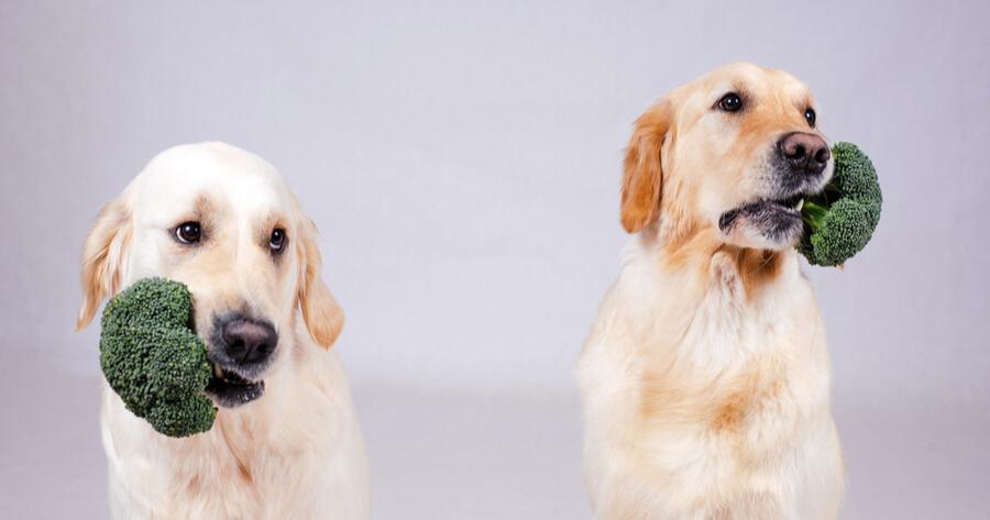 Hunde mit Brokkoli