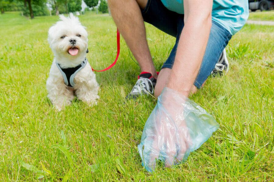 Hundekotbeutel aus Plastik