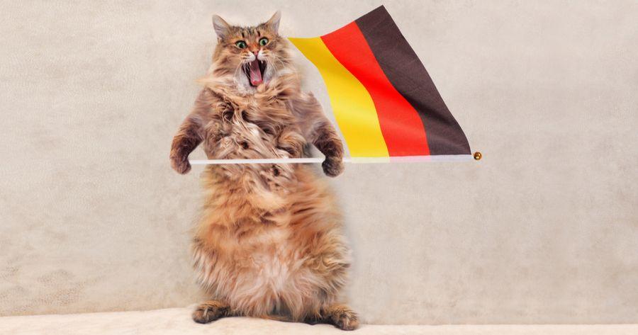 Katze mit Deutschlandflagge
