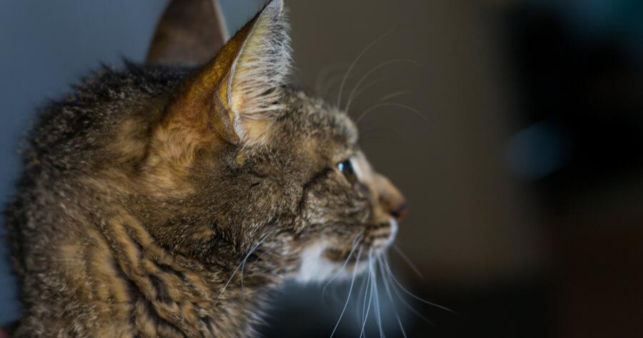 Katze Leberversagen