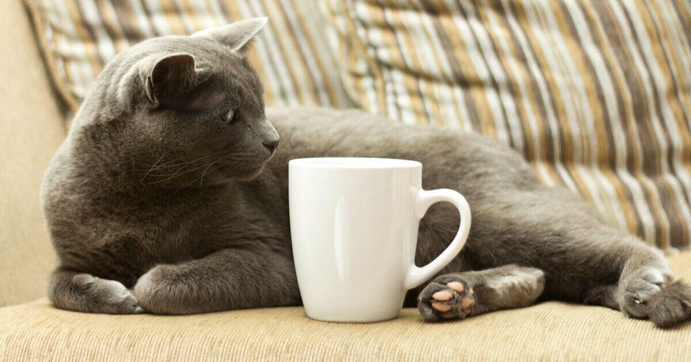 Katze Tee