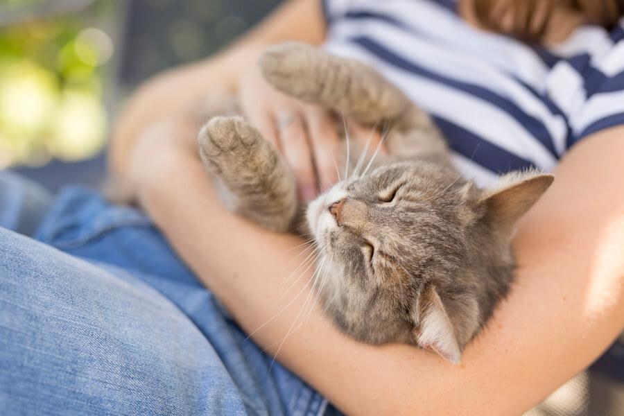 Katze Streicheleinheiten