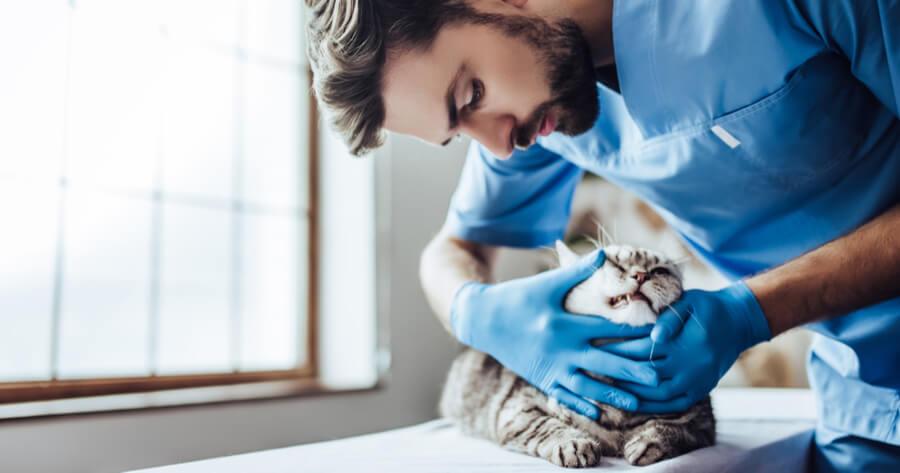 Katze hat Schuppe: Tierarzt überprüft
