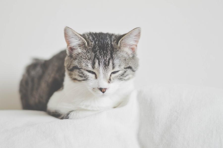 Katze mit halb geschlossenen Augen