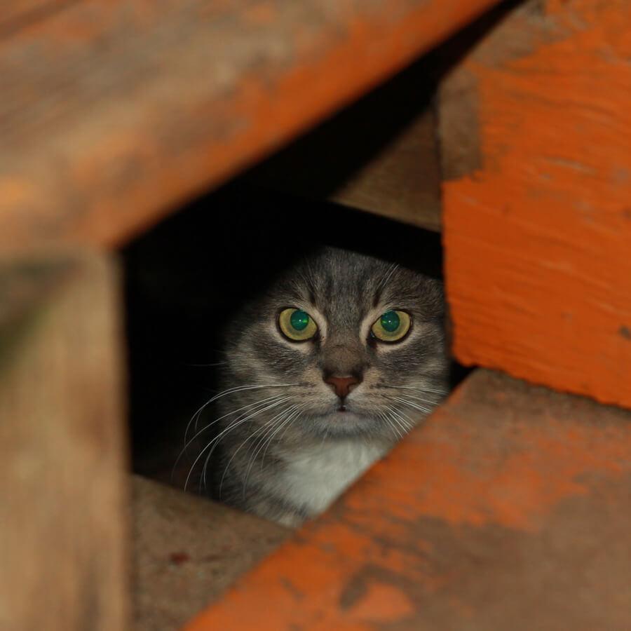 Katze im Keller