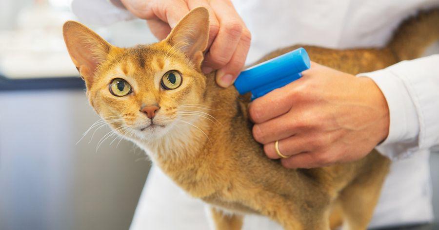 Katze mit Mikrochip