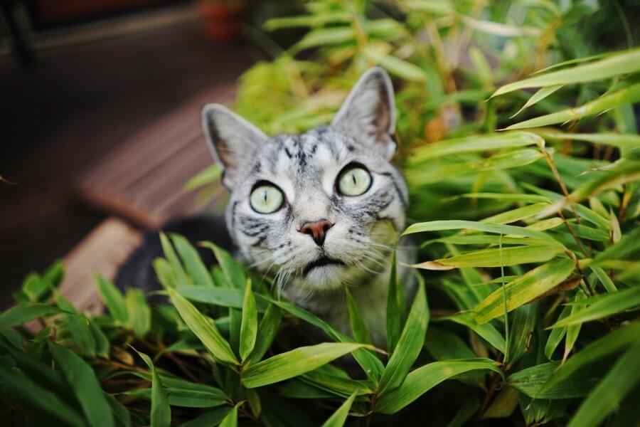 Katze mit Schlitzaugen